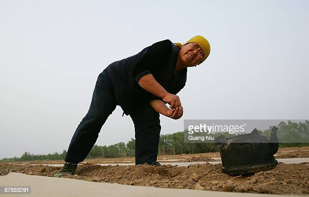 A farmer uses a teapot to pour a small amount of water on newly planted cotton in a field May 3 2006 on the outskirts of Baoding city Hebei province...