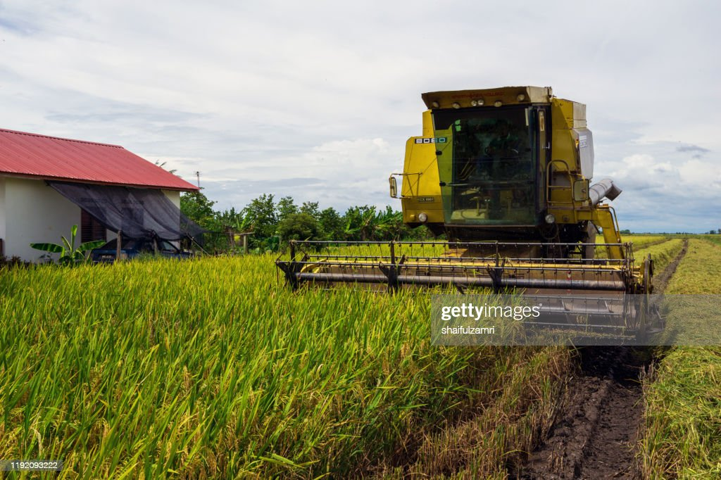 Farmer uses machine to harvest rice on paddy field at Sabak Bernam, Malaysia. : Stock Photo