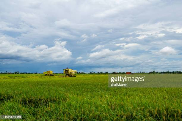 farmer uses machine to harvest rice on paddy field at sabak bernam, malaysia. - shaifulzamri stock pictures, royalty-free photos & images