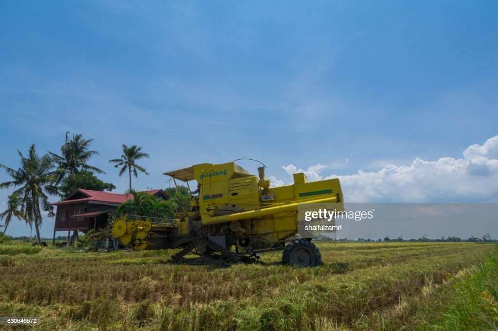 JULY 2017; Farmer uses machine to harvest rice on paddy field in Sabak Bernam. It is one of the major rice supplier in Malaysia. : Stock Photo