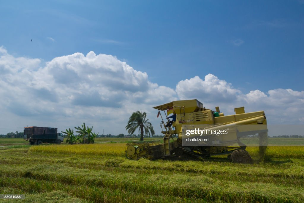 Farmer uses machine to harvest rice on paddy field in Sabak Bernam on July, 2017. Sabak Bernam is one of the major rice supplier in Malaysia. : Foto de stock