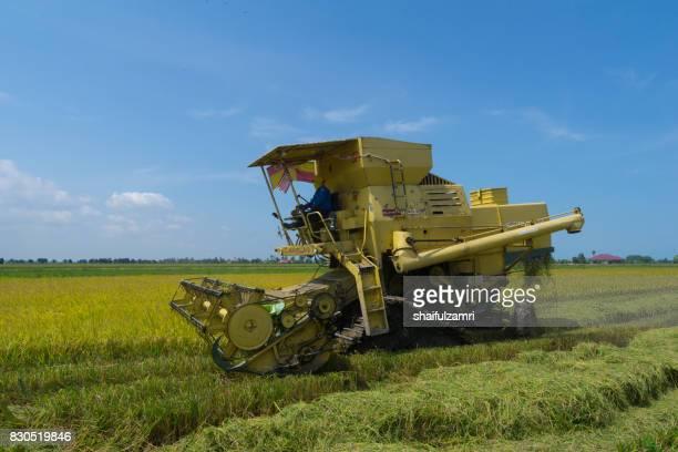 farmer uses machine to harvest rice on paddy field in sabak bernam on july, 2017. sabak bernam is one of the major rice supplier in malaysia. - shaifulzamri stockfoto's en -beelden