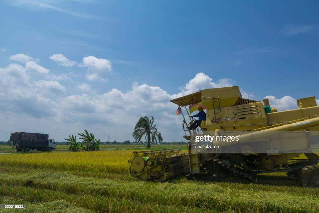 Farmer uses machine to harvest rice on paddy field in Sabak Bernam on July, 2017. Sabak Bernam is one of the major rice supplier in Malaysia. : Stock Photo