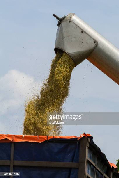 farmer uses machine to harvest rice on paddy field in sabak bernam, one of the major rice supplier in malaysia. - shaifulzamri bildbanksfoton och bilder