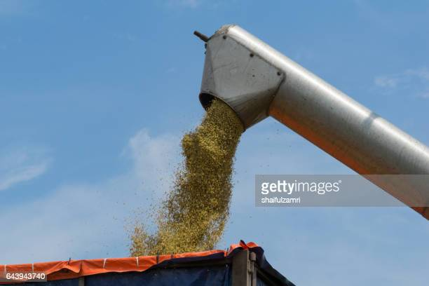 farmer uses machine to harvest rice on paddy field in sabak bernam, one of the major rice supplier in malaysia. - shaifulzamri foto e immagini stock