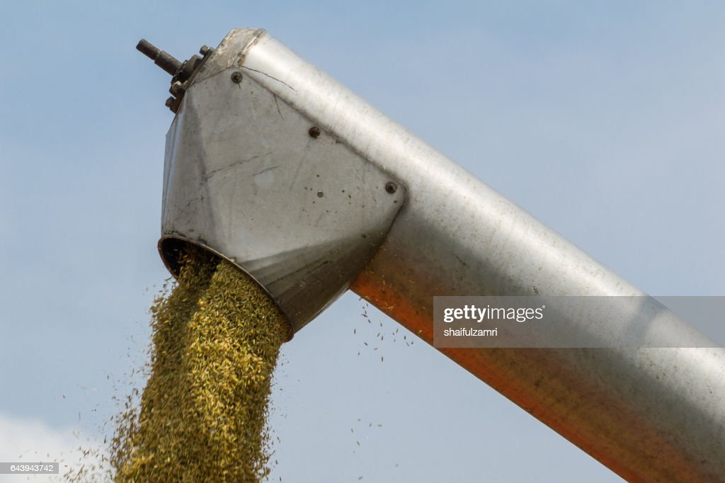 Farmer uses machine to harvest rice on paddy field in Sabak Bernam, one of the major rice supplier in Malaysia. : Stock Photo