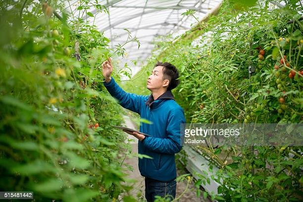 farmer using a digital tablet in a greenhouse - jgalione stock pictures, royalty-free photos & images