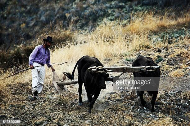 Farmer using a plow pulled by oxen near Merida Venezuela