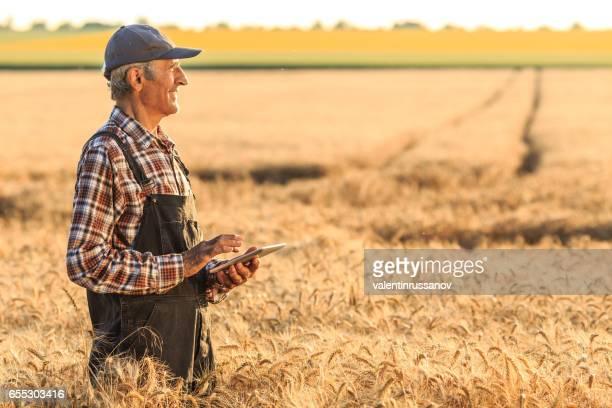 デジタル タブレットを使用して小麦畑の農家