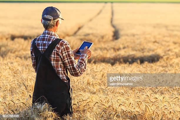Farmer using digital tablet on field