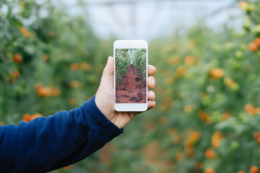 Farmer using smart phone in greenhouse - gettyimageskorea