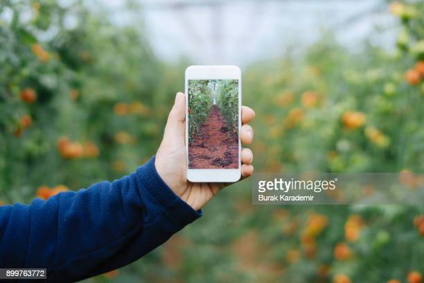 Farmer using smart phone in greenhouse