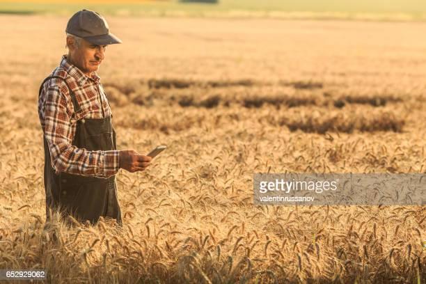 Farmer using smart phone in wheat field