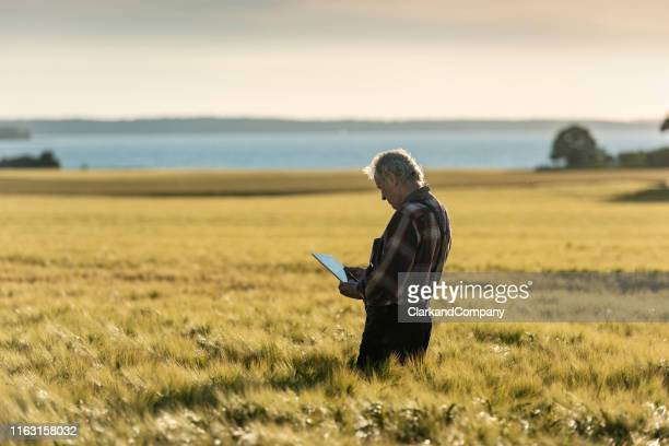 farmer using technology to monitor his crops. - agricultural activity stock pictures, royalty-free photos & images