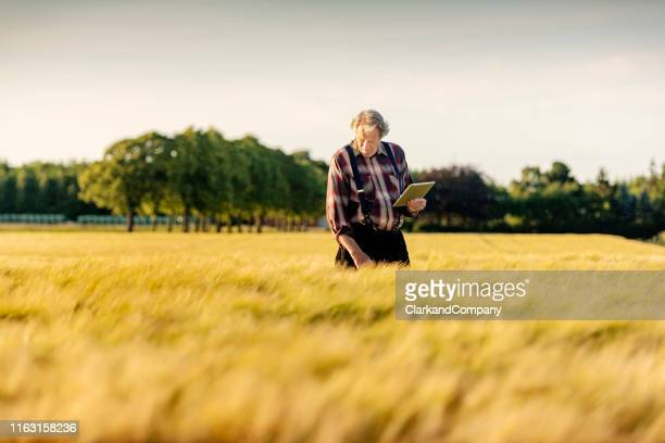 farmer using technology to monitor his crops. - business finance and industry stock pictures, royalty-free photos & images