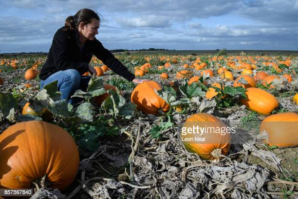 Farmer Verity Bachelor sits with the new pumpkin crop at 'PYO Pumpkins' on October 4 2017 in Hoo England The company began in 2009 and allows...