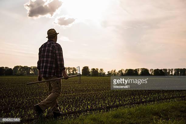 Farmer walking with rake along a field