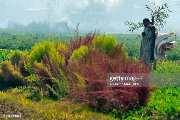 Farmer walks at a vegetable field on the outskirts of Srinagar on October 27, 2020.