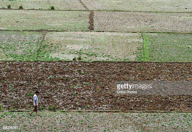 A farmer walks through dry fields on June 2 2005 in Leizhou of western Guangdong Province southern China According to Guangdong Provincial...