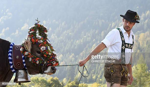 A farmer walks with a decorated cow at the socalled Allgaeuer Viehscheid cattle drive on September 9 2016 near the village of Oberstaufen southern...