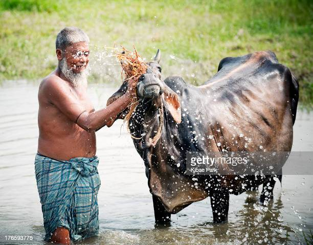 CONTENT] A farmer washes his water buffalo in Bulta Bangladesh According to the UN Food and Agriculture Organization it takes 1500 litres of water to...