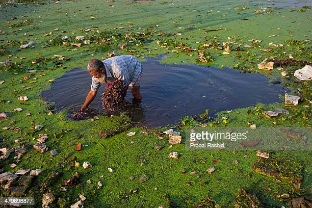 HAZARIBAGH DHAKA BANGLADESH A farmer washes vegetable for selling in contaminated pond water in Hazaribagh Dhaka's Hazaribagh area widely known for...