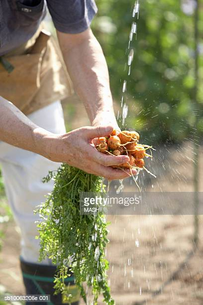 Farmer washing carrot, close-up, mid section