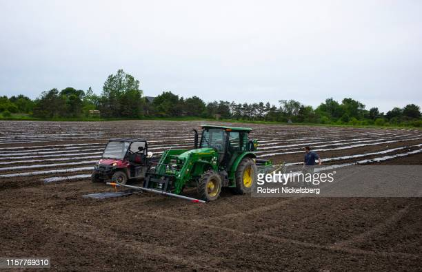 A farmer watches as a tractor lays down rows of plastic sheets which will hold seedlings of hemp plants for making CBD oil in Charlotte Vermont on...