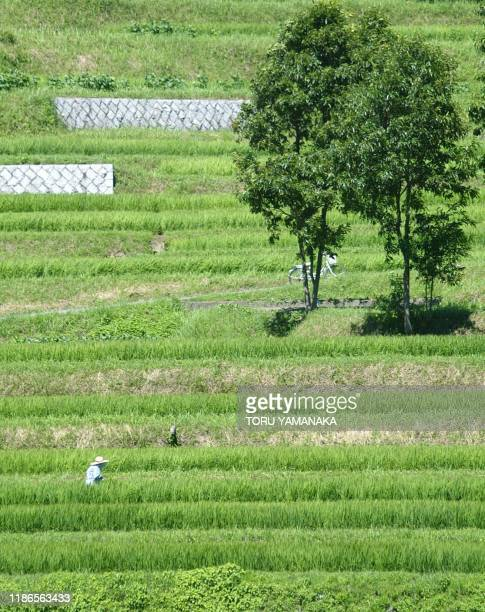 A farmer weeds her terraced paddy field which generations have cultivated for more than 1000 years at Asuka central Japan 26 July 2002 An...