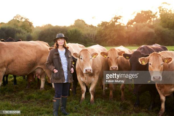 farmer who specialises in organic farming and a suckler herd - farmer stock pictures, royalty-free photos & images