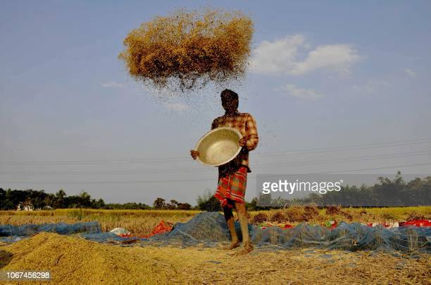 A farmer winnows paddy crops at a field on the outskirts of Agartala the capital of the northeastern state of Tripura on December 2 2018