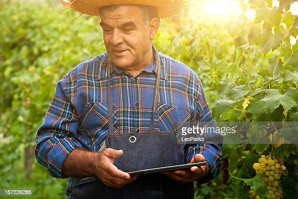 Farmer with a digital tablet in the vineyard