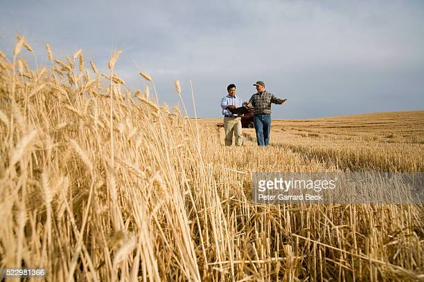 Farmer with Buyer Discussing the Crop at Harvest Time