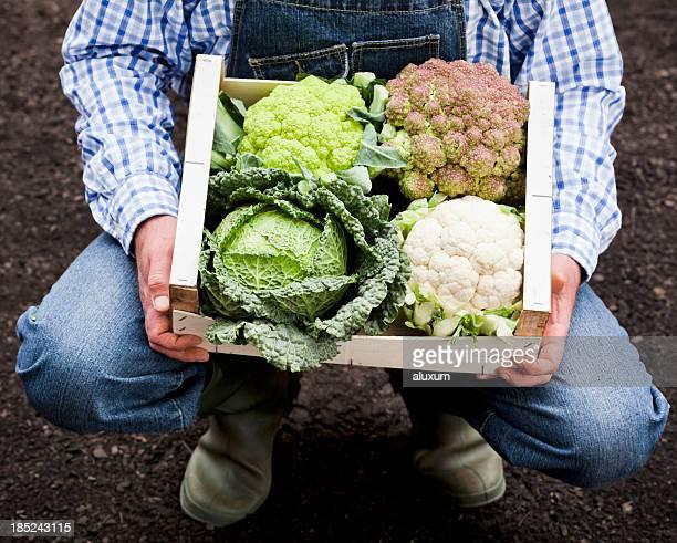 Agriculteur avec cabbages et cauliflowers