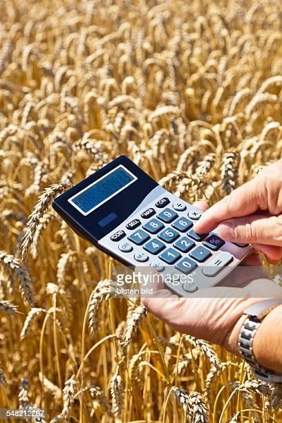 farmer with calculator in a corn field
