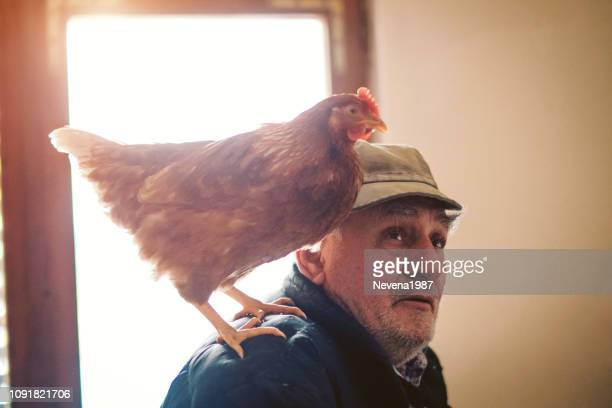 farmer with chickens - chicken bird stock pictures, royalty-free photos & images