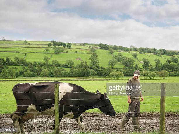 farmer with cow - organic farm stock photos and pictures