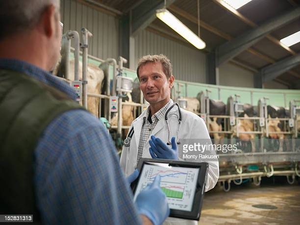 farmer with digital tablet and vet in discussion in rotary milking parlour on dairy farm with cows - grupo mediano de animales - fotografias e filmes do acervo