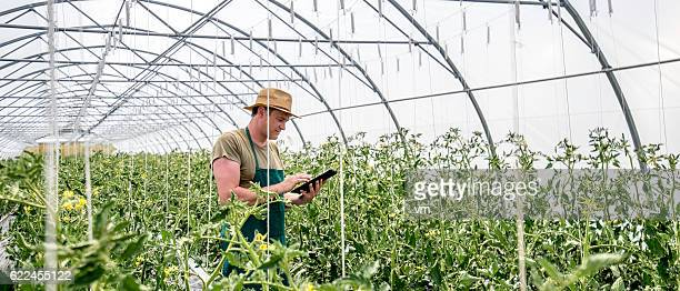 Farmer with digital tablet in greenhouse