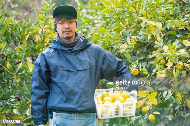 農家とれたてレモン彼の柑橘類のファームで