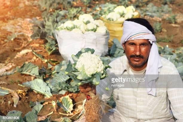 Agriculteur avec plein de sac de chou-fleur