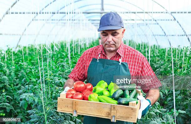 Farmer with hat In Greenhouse holding crate of vegetables
