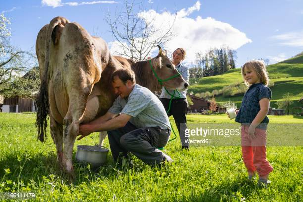 Farmer with his family milking a cow on pasture