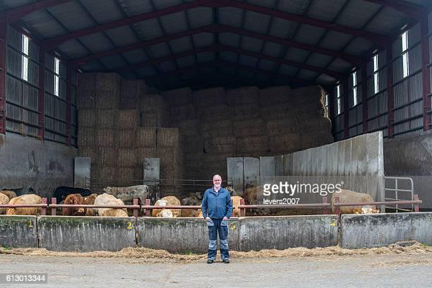 Farmer with his herd of bulls in barn