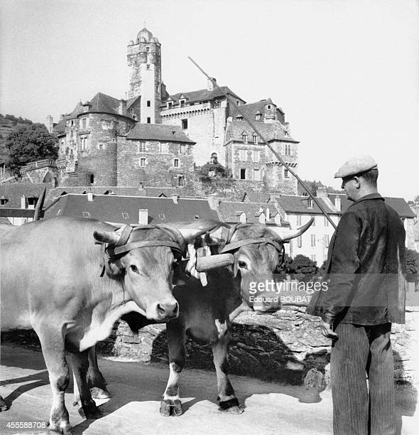 Farmer with his oxen in Espalion, France.