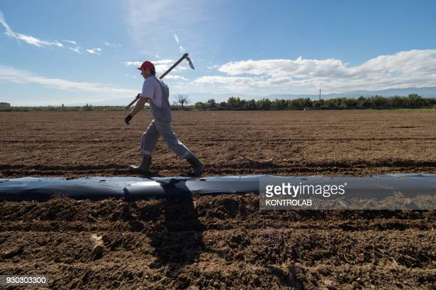 A farmer with hoe during the cultivation of vegetables and fruit in preparation for the summer harvest