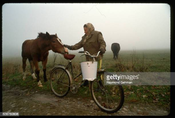 farmer with horse - bialowieza forest stock pictures, royalty-free photos & images