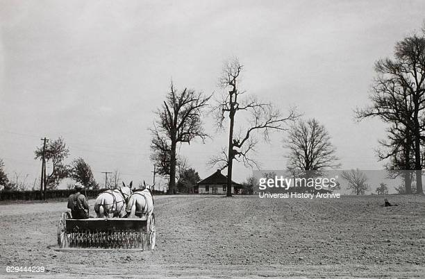 Farmer With HorseDrawn Grain Drill in Field USA circa 1930