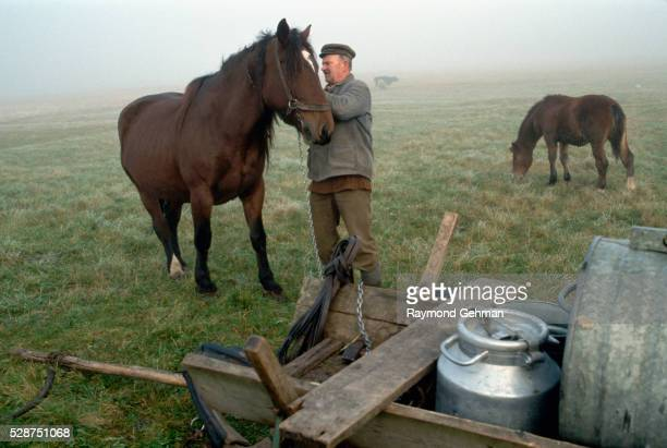farmer with horses - bialowieza forest stock pictures, royalty-free photos & images