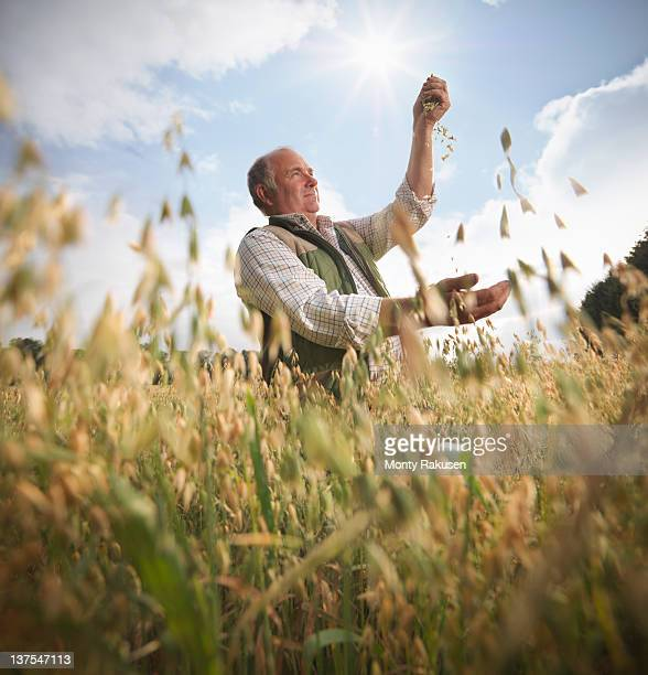 Farmer with oats (Avena sativa) in field
